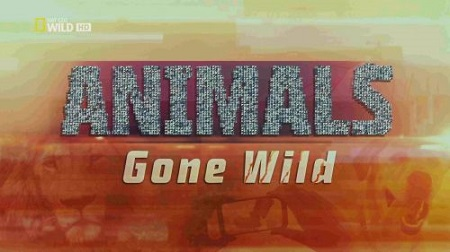 National Geographic - Animals Gone Wild: Hard Knocks (2016) 720p HDTV x264-ASCENDANCE