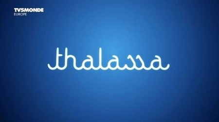 TV5Monde Thalassa (2017) Planete saumon PDTV x264 AAC - MVGroup